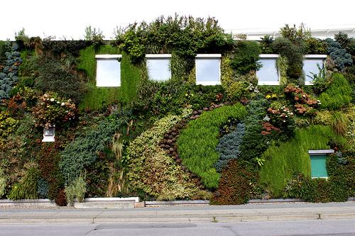 Murs v g talis o peut on se procurer les mat riaux pour for Realiser un mur vegetal exterieur