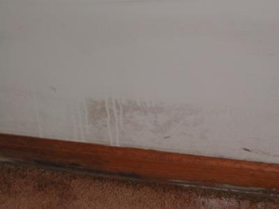 aspect que peuvent prendre les moisissures sur un mur de gypse peint