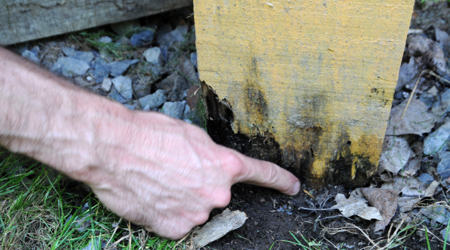 Maisons con ues pour durer guide cohabitation - Insecte maison humidite ...