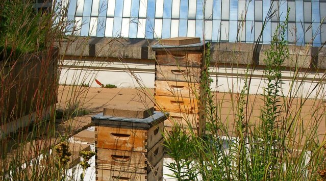 Apiculture urbaine : des abeilles sur nos toits