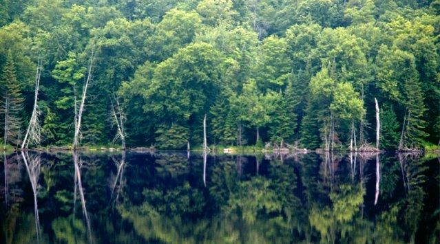 Terrains à vendre dans un domaine écologique