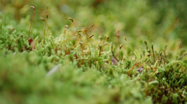 Avantages et désavantages d'un toit vert, toit végétal