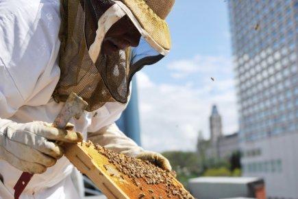 Apiculture urbaine : Les abeilles débarquent en ville!