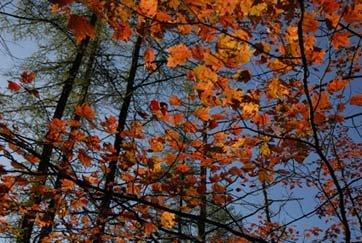 Arbres CO2 Action : planter des arbres contre le réchauffement climatique