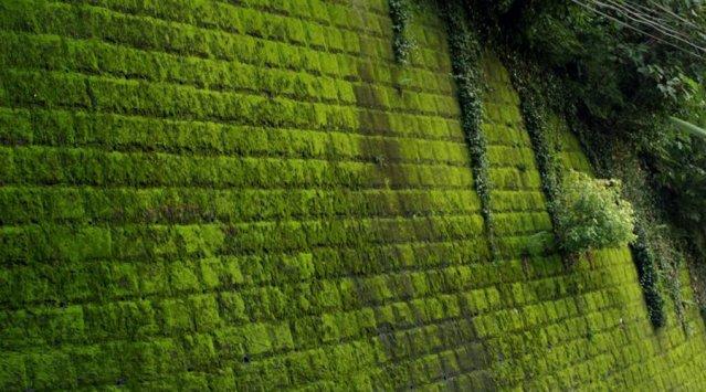 Vegetaux le mur v g tal pour de la d co colo for Insonorisation mur exterieur