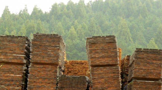 Questions réponses sur la certification de bois FSC