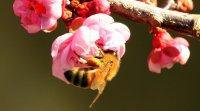Atelier TerraVie faune et permaculture : abeilles sauvages