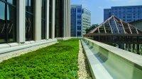 Mise en oeuvre de toit végétal, toit vert, toits végétaux