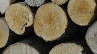 Cohabitation for Fournaise au bois exterieur