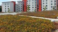Toits verts multilogement Fiche technique : Tout sur... Les toits végétalisés
