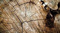 Avantages d'utiliser du bois en construction et les limites au Québec