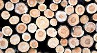 Bien choisir son bois de construction