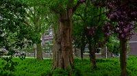 reboisement, canopée, arbres, biodiversité urbaine