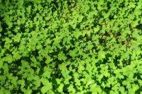 Les toits verts réduisent les coûts de climatisation et de chauffage