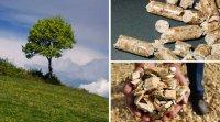 Chauffez vert pour moins cher : les granules de bois