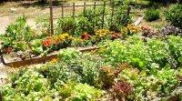 Aménagement paysager écologique +comestible: adoptez les engrais verts