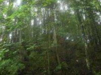 La forêt privée, nouvelle cible des spéculateurs et promoteurs