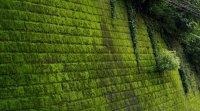 Mur végétal, décoration  écolo