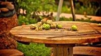 L'ABC de la permaculture