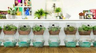 L'aquaponie domestique, un système en symbiose où tout se transforme et rien ne