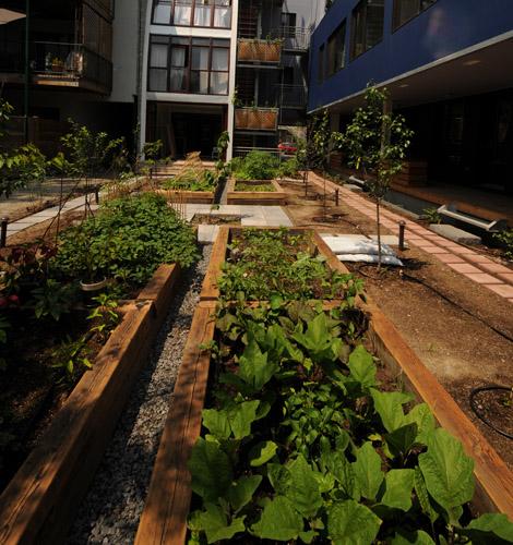 Jardin cultiver en ville petit guide en ligne pour le for Heure de jardinage