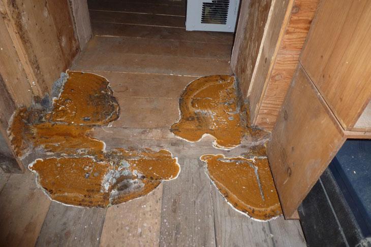 comment reconnaitre merule coniophore des caves champignon coniophore le traitement des. Black Bedroom Furniture Sets. Home Design Ideas