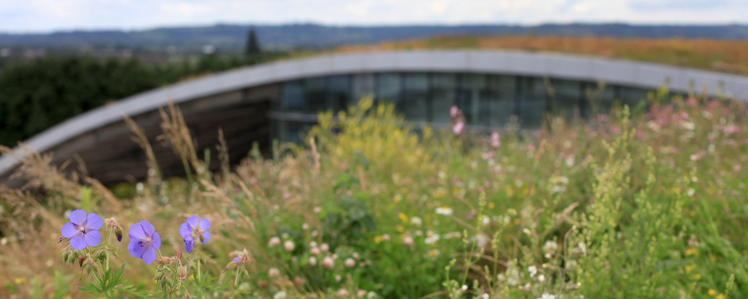 Refaire Un Toit D Abri De Jardin toit vegetal : étape par étape, avantages et inconvénients