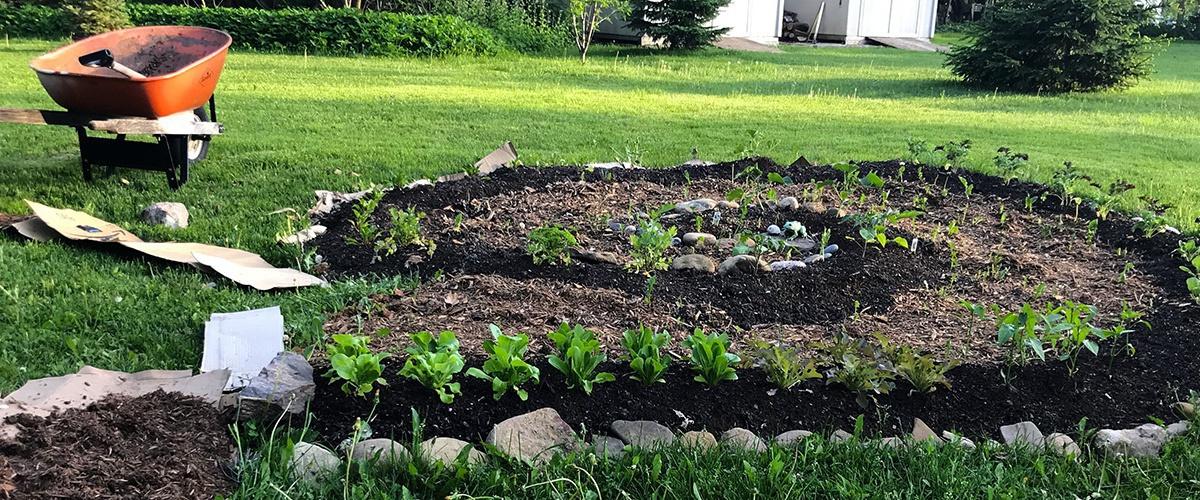 Faire Son Jardin En Lasagne Guide Facile Ecohabitation